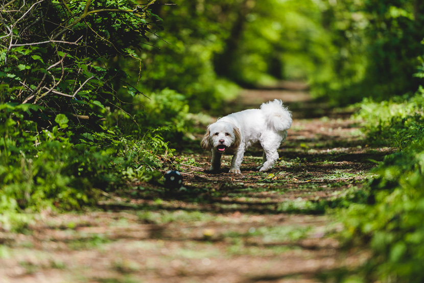 rauceby-woods-pet-photography-Henry-Shear